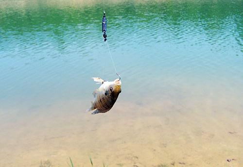 周末,深圳水库钓鱼