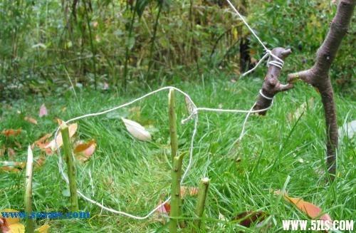 野外钓鱼、下套打猎、设置陷井等图片详解