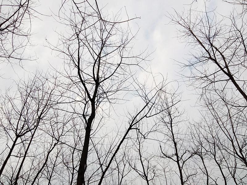 益阳青龙洲冬景,青龙洲散步